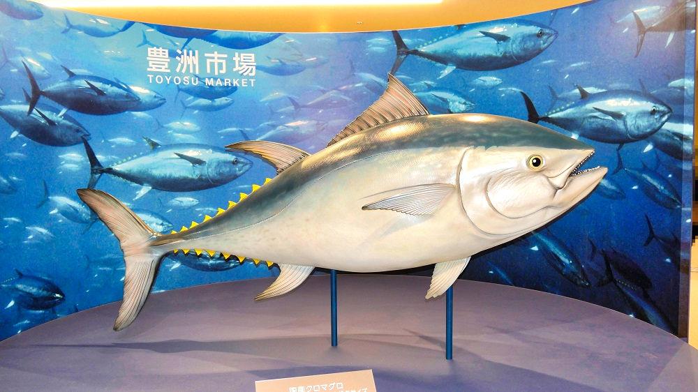 豊洲市場のクロマグロ模型