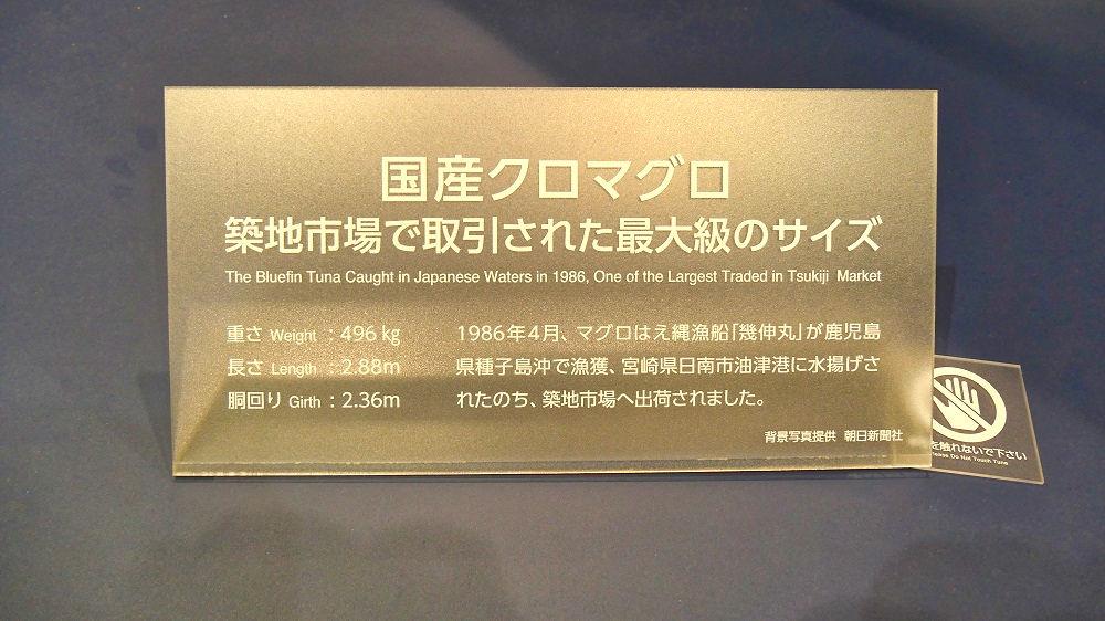 豊洲市場水産卸売場棟入口のマグロ模型プレート