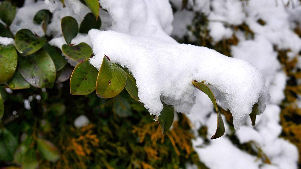 首都圏の降雪