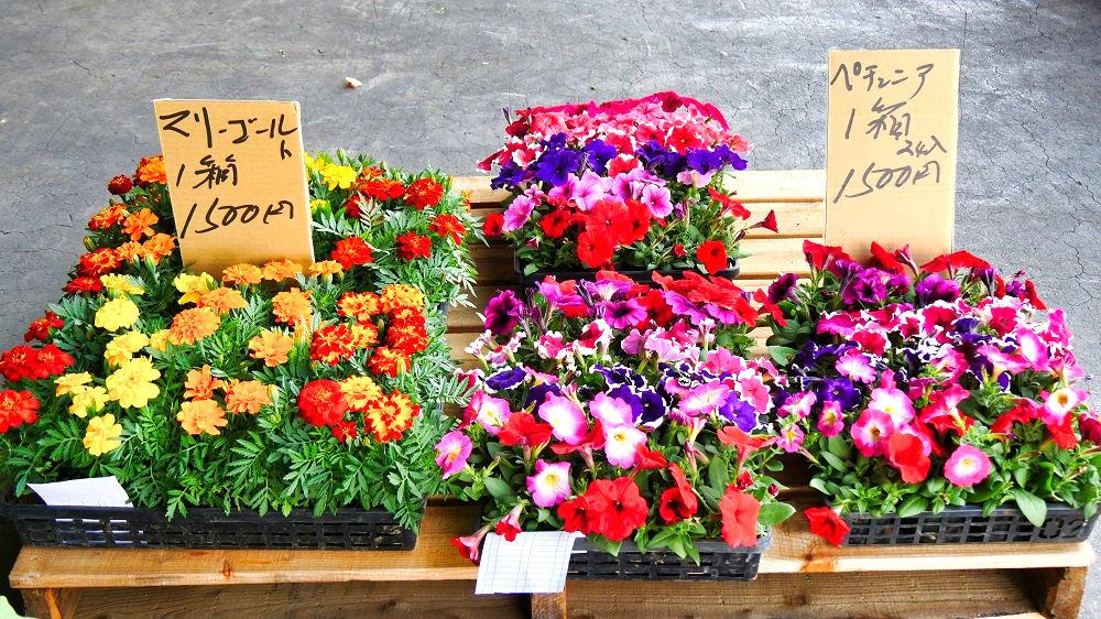 成田市場の青果棟の花き類の販売