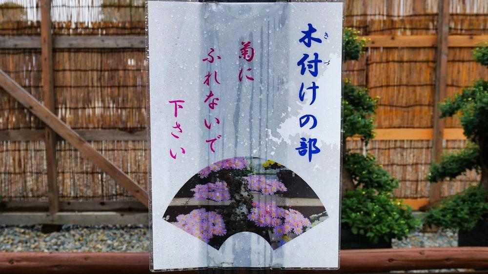 第136回成田山菊花大会の『第一会場』