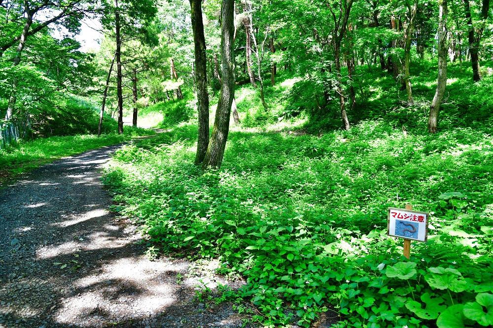 『房総のむら』の山道・林道部分
